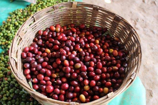 ★フェアトレード&無農薬コーヒー★ メキシコ マヤビニック 中深煎り 200g(粉)