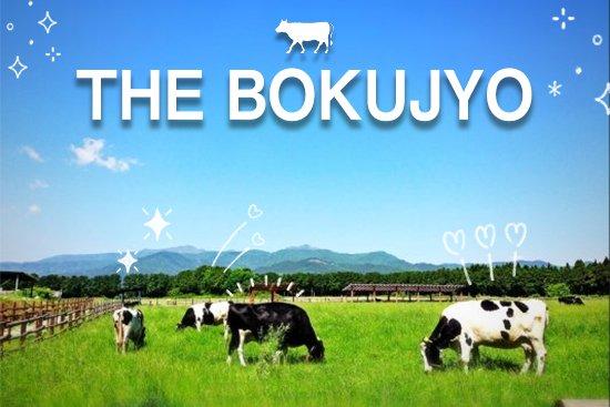 一番売れたアイスの食べ比べセット!THE BOKUJYO