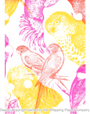 212 Eco Australian Birds 50cm巾<img class='new_mark_img2' src='https://img.shop-pro.jp/img/new/icons32.gif' style='border:none;display:inline;margin:0px;padding:0px;width:auto;' />