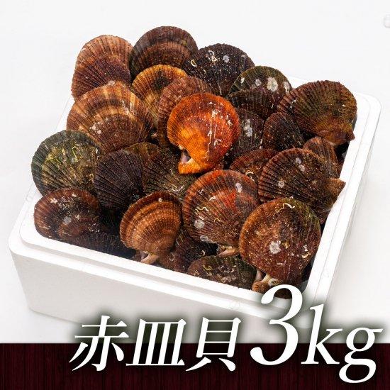 赤皿貝(3kg)[加熱用]【送料込】