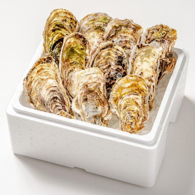 【おうちでカキまつり対象】殻付き牡蠣10コ[加熱用]【送料込】