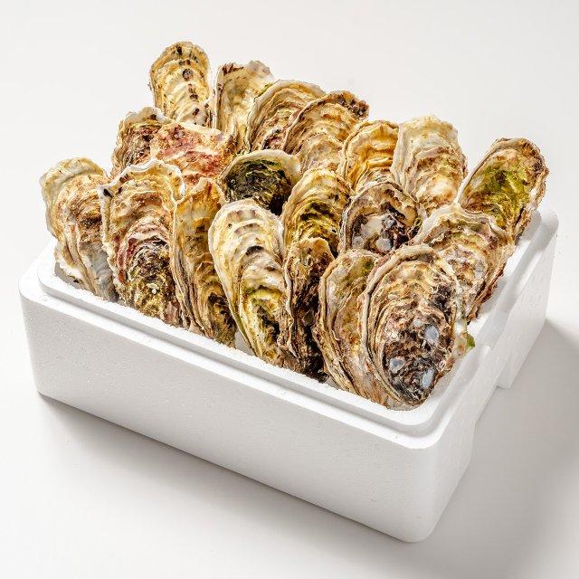 【おうちでカキまつり対象】殻付き牡蠣20コ[加熱用]【送料込】