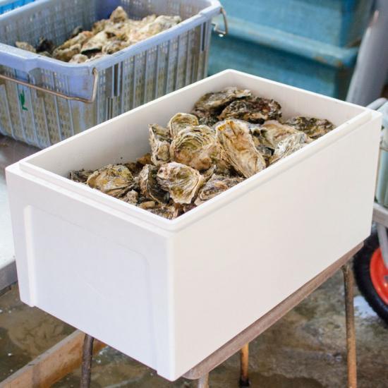 岩手県山田湾産 無選別殻付き牡蠣(15kg)[加熱用]