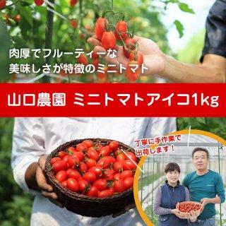 山口農園 ミニトマトアイコ【1�】