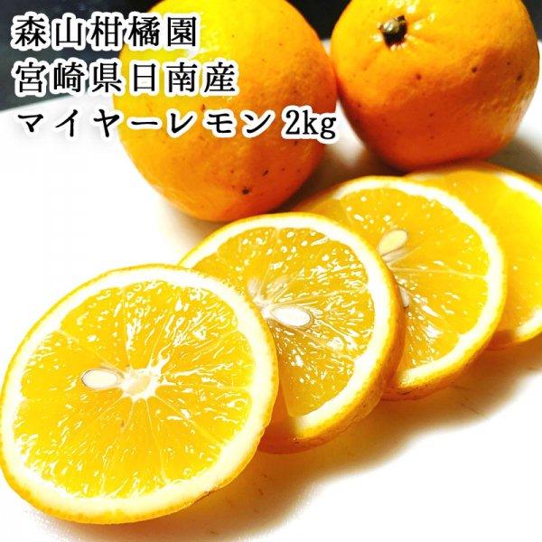 【宮崎産地直送】宮崎県日南産マイヤーレモン(グリーン) 2�  森山柑橘園 季節限定