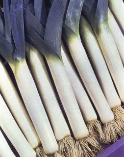 ブラックリーキ(西洋ネギ)の種