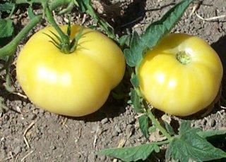 ハーフムーンチャイナトマトの種