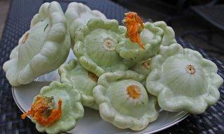 パティパンかぼちゃの種: グリーンティント
