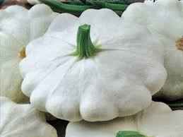 パティパンかぼちゃの種: ホワイト