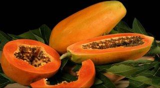レッドレディーパパイア(低木)の種