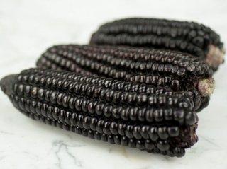ブラックインカンコーン(クリコーン)の種