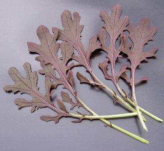 レッドフリルマスタード(カラシナ)の種