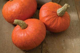 サンシャインかぼちゃの種 *F1