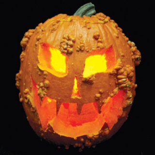 ハロウィンかぼちゃ(Knuckle Head)の種 *F1