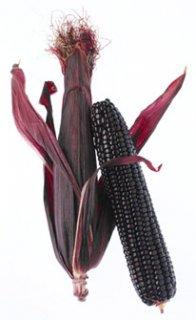 モラドパープルコーンの種