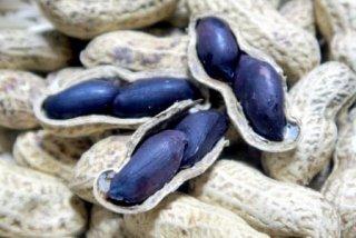 黒落花生(ブラックピーナッツ、2粒タイプ)の種 *立ち性