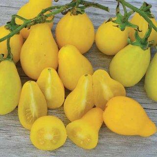 ビームスイエローペアートマトの種