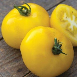 サニーボーイハイブリッドトマトの種 *F1