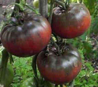 ブラッククリムトマトの種