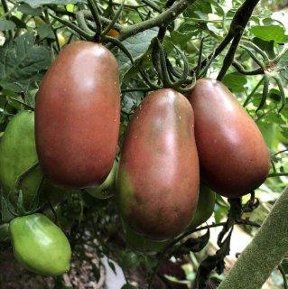 ウクラニアンパープルトマトの種