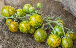 グリーンゼブラチェリートマトの種