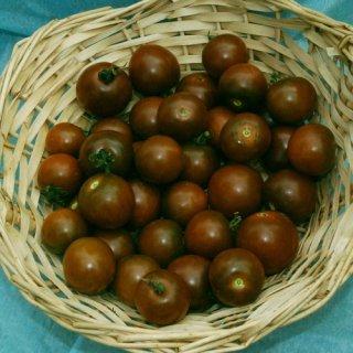 ブラウンベリートマトの種