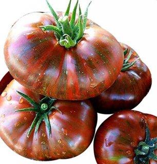 チョコレートストライプトマトの種