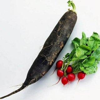 ブラックスパニッシュロングラディッシュの種