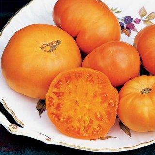 アマナオレンジトマトの種