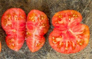 ドワーフカンガルーパウブラウントマトの種
