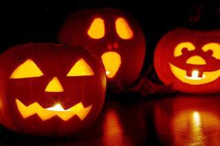 ハロウィンかぼちゃ(Jack O'Lantern)の種