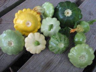 パティパンかぼちゃの種: トリオ