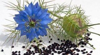 ブラックシード(ブラッククミン)の種