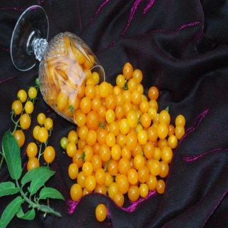 イエロースプーントマト(世界一小さいプチトマト)の種