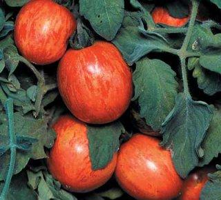 エルバータピーチトマトの種
