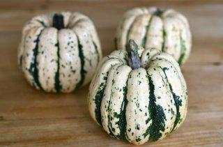 ゴールドエイコーンかぼちゃの種