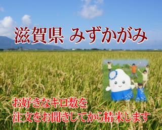令和二年度産 特別栽培米 滋賀みずかがみ(農薬50%減・化学肥料50%減)1kg
