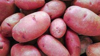 無農薬栽培 レッドムーン (5kg、10kg) 寿都産 自社農園 送料無料