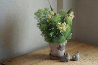 【1点もの】北欧風鉢にランとオージープランツの寄せ植え