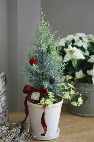 針葉樹サルフレアのクリスマスツリー仕立て
