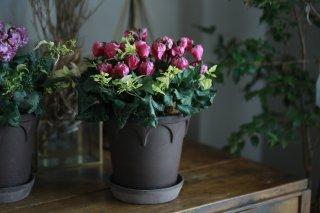 【1点もの】シクラメン「ベリッシマ」の北欧鉢植え(A)
