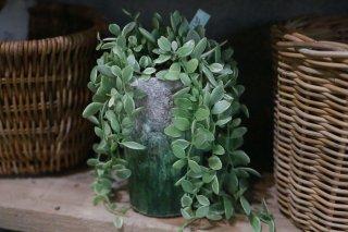ディスキディア ロング鉢植え
