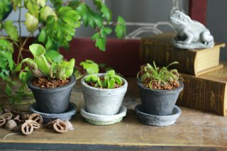 【3点セット】食虫植物