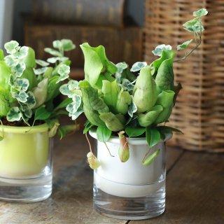 【1点もの】サラセニアとウツボカズラのソーク鉢植え(ホワイト)