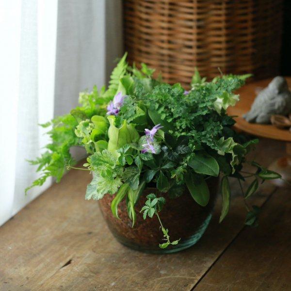 【1点もの】マイクロ胡蝶蘭のサラダボウルブリコラージュ