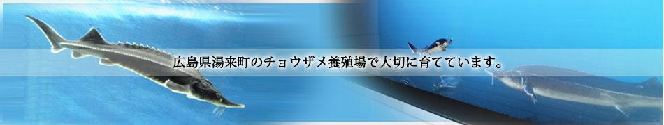 観賞魚チョウザメ専門ショップ