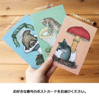 ●猫とネコのお友達5● ポストカード