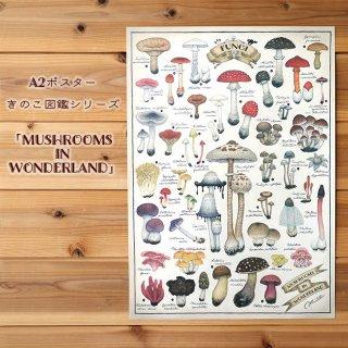 A2ポスター ●キノコ図鑑シリーズ3●MUSHROOMS IN WONDERLAND
