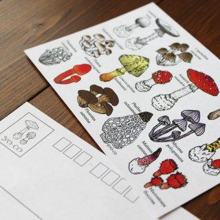 ●キノコ図鑑シリーズ● 15種類のキノコと毒きのこ ポストカード