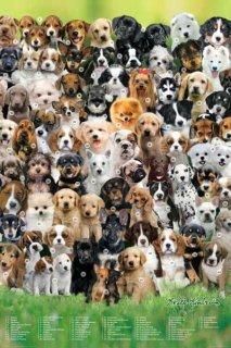 犬の種類(キース・キンバリン) ポスター